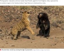噛まれてもベンガルトラに挑むナマケグマ 壮絶な闘いをカメラが捉えた!(印)