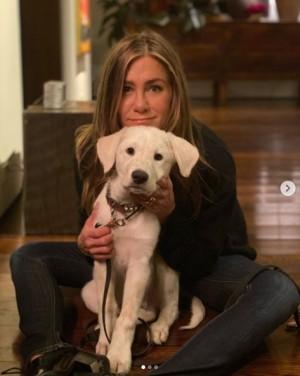 【イタすぎるセレブ達】ジェニファー・アニストン、引き取った保護犬の成長ぶりを公開 元夫ジャスティン・セローもハートマークで反応