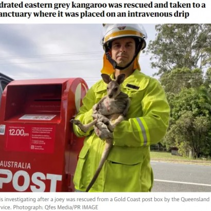 【海外発!Breaking News】郵便ポストの中に赤ちゃんカンガルーが見つかる 熱中症寸前で救出(豪)