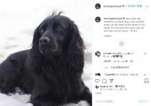 ウィリアム王子・キャサリン妃一家の愛犬が天国へ 妃の弟ジェームズさんも追悼