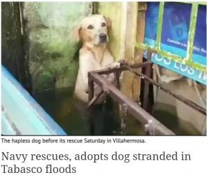【海外発!Breaking News】洪水で取り残され怯える野良犬 無事救出後、海軍の新メンバーに(メキシコ)<動画あり>