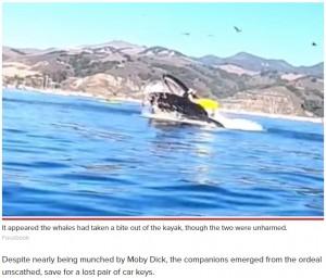 【海外発!Breaking News】ホエールウォッチングで女性2人がカヤックごとクジラの口の中に 衝撃に言葉を失う人々(米)<動画あり>