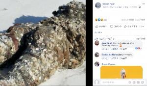 マネキンの表面にびっしりと張り付いたフジツボ(画像は『Ocean Hour 2020年11月17日付Facebook「Volunteer Kathleen was walking the intercoastal side in Perdido Key...」』のスクリーンショット)