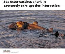 ラッコがサメを抱えて噛みつく衝撃の瞬間 専門家も「捕食の相互関係が入れ替わった貴重な写真」(米)