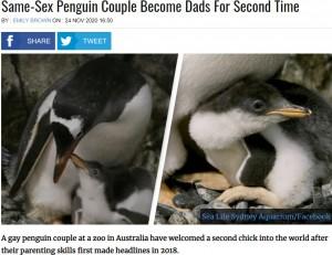 """【海外発!Breaking News】オス同士のペンギンカップルが""""里親""""として卵の孵化に成功 2度目の父親に(豪)"""