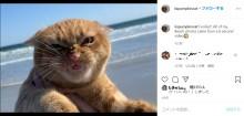 """【海外発!Breaking News】「しょっぱいニャン!」初めてビーチを訪れた猫 強い潮風に""""イカ耳""""で「超絶不満顔」になる(カナダ)"""