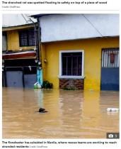 【海外発!Breaking News】台風で浸水した街中の濁流を、木の板に乗り進むネズミ「全ての生き物が助かりたいと願っている」(フィリピン)