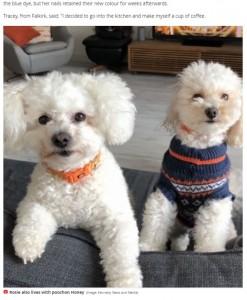 真っ白な毛並みを持つロージー(左)(画像は『Mirror 2020年11月15日付「Freshly-groomed dog left 'looking like Smurf' after biting into ink cartridge」(Image: Kennedy News and Media)』のスクリーンショット)