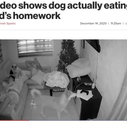 【海外発!Breaking News】宿題を終えて眠りについた少年、飼い犬2頭が引っ張り合って紙くずに(フィリピン)<動画あり>