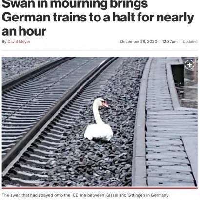 【海外発!Breaking News】線路で死んだパートナーのそばを離れない白鳥、列車が1時間運行停止に(独)