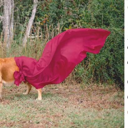 【海外発!Breaking News】妊娠中の野良犬を保護した女性、マタニティフォトで「動物愛護に関心を持って」と訴える(米)