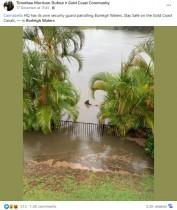 運河が決壊し民家の裏庭にオオメジロザメが出現! 「まるでB級映画のワンシーン」(豪)