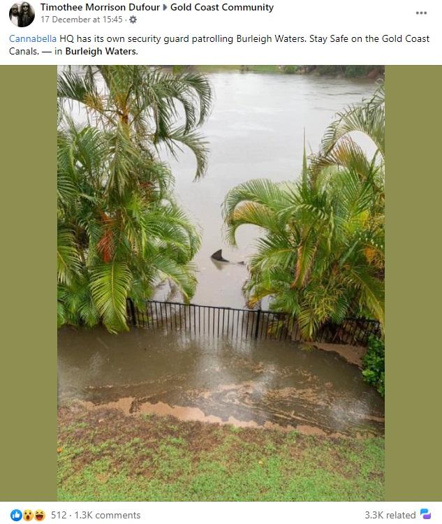 民家の裏庭に突如現れたオオメジロザメ(画像は『Timothee Morrison Dufour 2020年12月17日付Facebook「Cannabella HQ has its own security guard patrolling Burleigh Waters.」』のスクリーンショット)