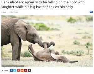 【海外発!Breaking News】兄にくすぐられてはしゃぐ子ゾウ 撮影した写真家も「これを見ると笑顔になれる」(南ア)<動画あり>