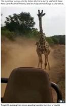 【海外発!Breaking News】「まるでジュラシック・パーク」キリンが観光客の乗ったトラックに猛突進(ケニア)<動画あり>