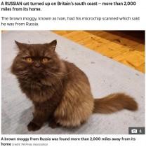 【海外発!Breaking News】ロシアからイギリスへ、3200キロの道のりを移動した猫