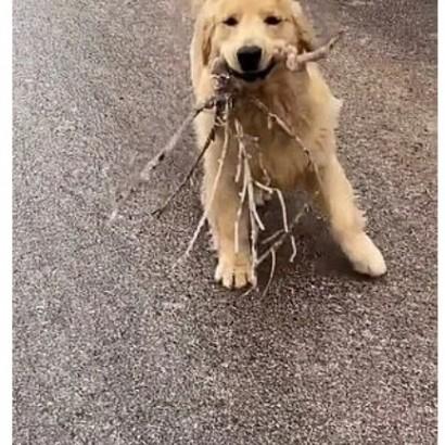 【海外発!Breaking News】木の枝をくわえた犬 ツルツル滑りながら飼い主に駆け寄る姿が笑顔誘う(中国)<動画あり>