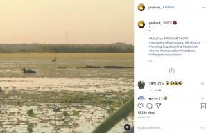 ハンターに撃たれたカモを横取りに行くワニ(画像は『PRO HUNT 2020年11月25日付Instagram「TAXED」』のスクリーンショット)
