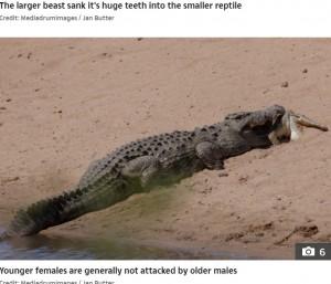 決して小さくはない若いワニに噛みつく巨大ワニ(画像は『The Sun 2020年12月21日付「CROC EAT CROC WORLD Incredible moment 13ft half-ton CANNIBAL crocodile EATS a youngster in South Africa」(Credit: Mediadrumimages / Jan Butter)』のスクリーンショット)