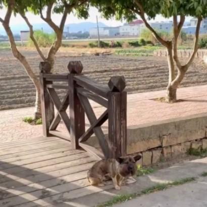 【海外発!Breaking News】首輪が食い込み頭部が倍以上になるも奇跡的に回復した野良犬(中国)