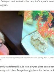 【海外発!Breaking News】タツノオトシゴが高圧酸素療法で回復 「気泡病」治療の貴重な成功例に(米)<動画あり>