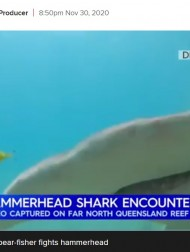 【海外発!Breaking News】ダイビング中にシュモクザメと遭遇 難を逃れるも水中カメラが恐怖の瞬間を捉える(豪)<動画あり>
