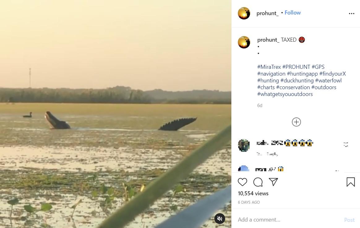 カモを丸飲みにする体長約4メートルの巨大なアリゲーター(画像は『PRO HUNT 2020年11月25日付Instagram「TAXED」』のスクリーンショット)