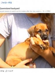 【海外発!Breaking News】子犬を襲ったヘビにラッピングペーパーの筒で対抗 救出した飼い主「無我夢中だった」(豪)<動画あり>