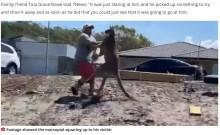 巨大カンガルーのキックを食らった男性、地面に倒れ込むも無事(豪)<動画あり>