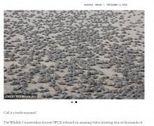 【海外発!Breaking News】約10万匹のカメが孵化 川に向かって大行進(ブラジル)<動画あり>