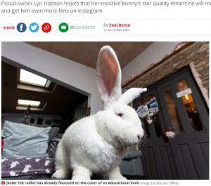 【海外発!Breaking News】超巨大ウサギへの愛を爆発させる飼い主「誰もが羨む最高のペットよ」(英)