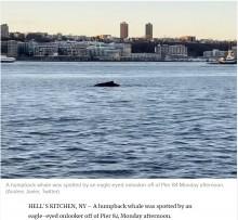 【海外発!Breaking News】米ハドソン川にクジラ現る 水質の改善により目撃例が増加<動画あり>