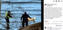 【海外発!Breaking News】診察が嫌? 逃げ出したペットのヤギ、海に飛び込むも救出され動物病院へ(米)