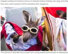 【海外発!Breaking News】森林火災で火傷を負ったカンガルー、ゴーグルを付けレーザー治療を受ける(豪)