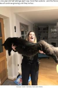 黒猫のシャドウとメアリーさん(画像は『LADbible 2020年11月27日付「Woman's Cats Are So Massive People Accuse Her Of Photoshopping Pictures」(Credit: Kennedy News and Media)』のスクリーンショット)