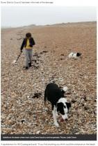 【海外発!Breaking News】浜辺から持ち帰った漂着物が自宅で発火 第二次世界大戦当時の手榴弾か(英)