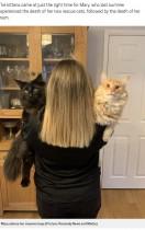 【海外発!Breaking News】「写真加工?」と言われるほど巨大な猫 飼い主は「抱きしめがいがあるの!」(英)