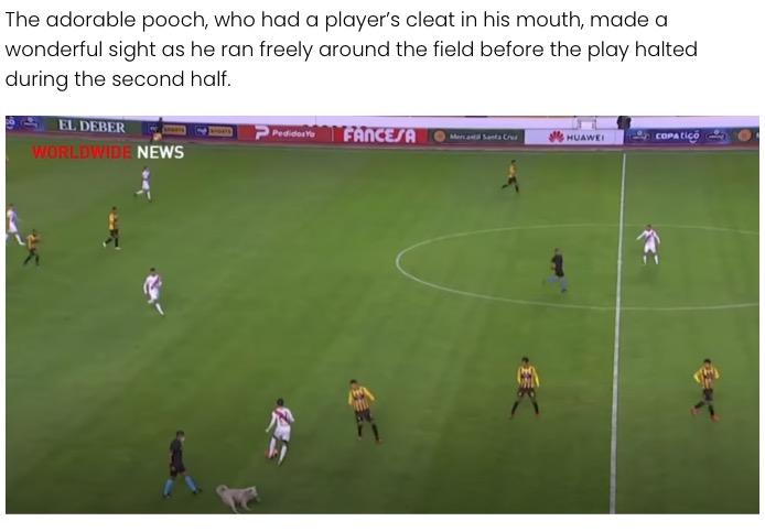 一時中断した試合はそのまま中継された(画像は『Elite Readers 2021年1月5日付「Bolivian Soccer Player Adopts Stray Dog Who Interrupts Match」』のスクリーンショット)