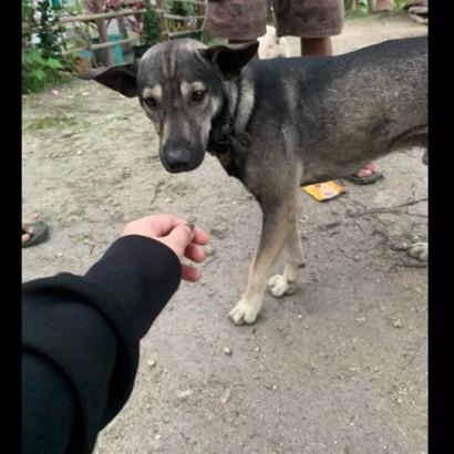 【海外発!Breaking News】走行中の運転手に吠え続けて、新生児が捨てられていることを伝えた犬(フィリピン)