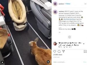 【海外発!Breaking News】カンガルーが機内で跳ねる可愛い光景 法改正で「これが最後かも」と話題に(米)<動画あり>