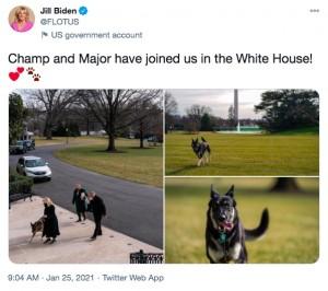ジル夫人、愛犬達のホワイトハウス到着をツイート(画像は『Jill Biden 2021年1月25日付Twitter「Champ and Major have joined us in the White House!」』のスクリーンショット)