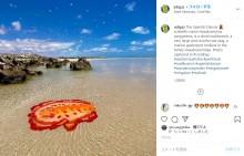 浅瀬に現れた大きなウミウシに驚き 鮮やかな色が「アート作品のよう」(豪)<動画あり>