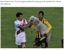 【海外発!Breaking News】サッカー試合に乱入した野良犬、2日後に怪我をして選手が飼い主に(ボリビア)<動画あり>