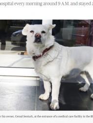 【海外発!Breaking News】入院した飼い主を病院の外で待つ犬「何度連れて帰っても戻ってきた」(トルコ)<動画あり>