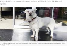 入院した飼い主を病院の外で待つ犬「何度連れて帰っても戻ってきた」(トルコ)<動画あり>