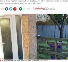 【海外発!Breaking News】庭の青いオウムを保護しようとした父、その正体に気付き大爆笑(スコットランド)