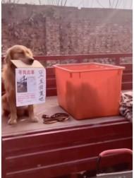 """【海外発!Breaking News】さらわれた""""親友""""に「帰ってきて」 飼い主が書いたメッセージをくわえて情報提供を呼びかける犬(中国)<動画あり>"""