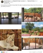 【海外発!Breaking News】野生保護区内の住宅でベランダにライオンの群れ「この家の警備は最強」(南ア)<動画あり>