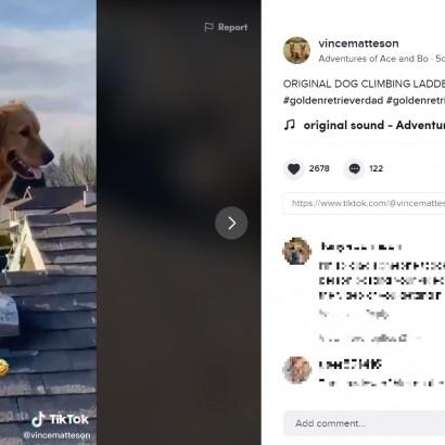 【海外発!Breaking News】屋根で作業中、背後から現れた愛犬に飼い主「どうやってここに!?」 全ての答えは監視カメラに(米)<動画あり>