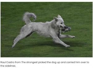 試合の最中に乱入した野良犬(画像は『Elite Readers 2021年1月5日付「Bolivian Soccer Player Adopts Stray Dog Who Interrupts Match」』のスクリーンショット)